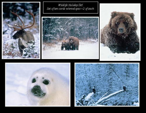 Wildlife Holiday Note Card Set