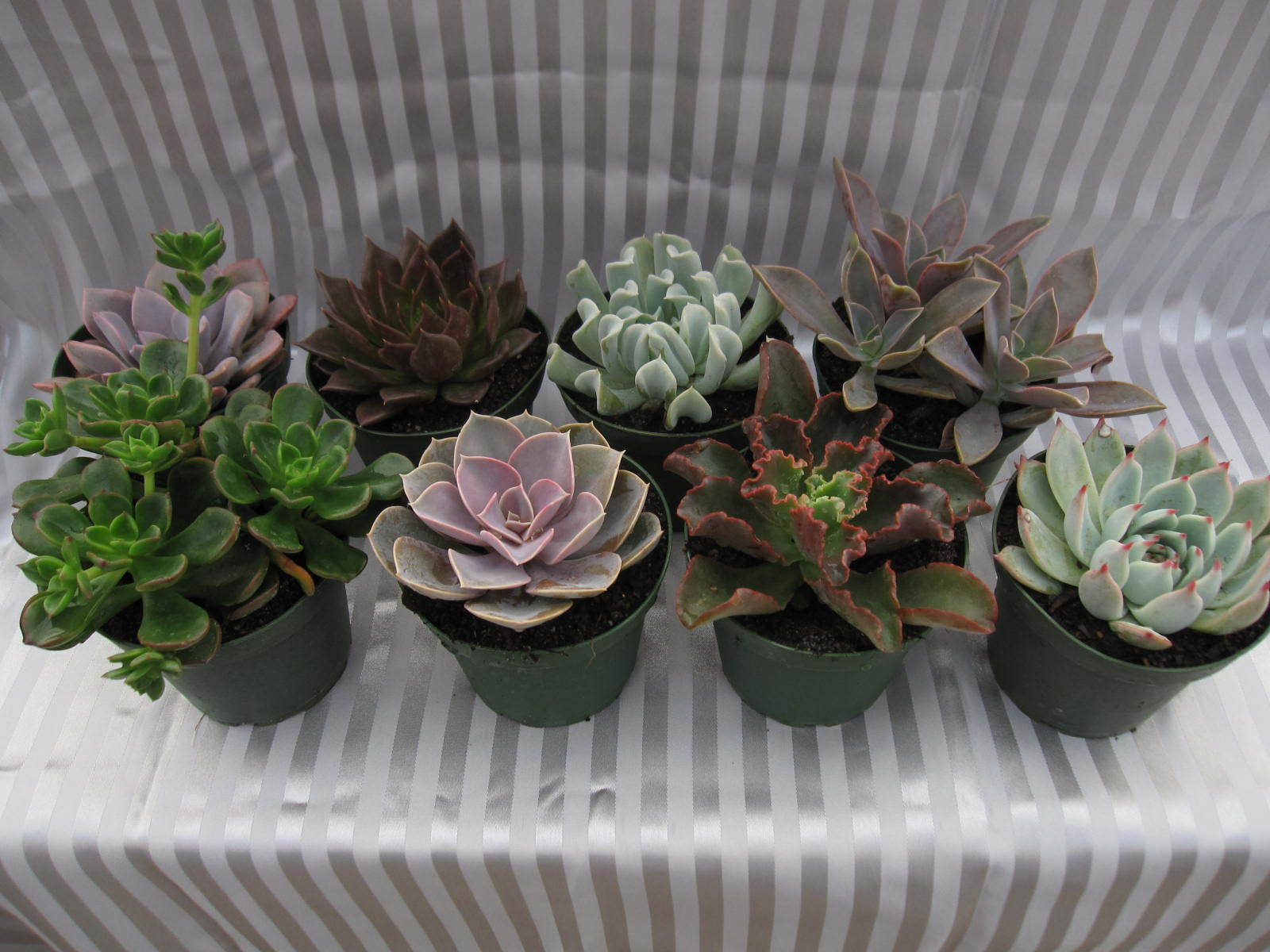 4in_ECHEVERIAS