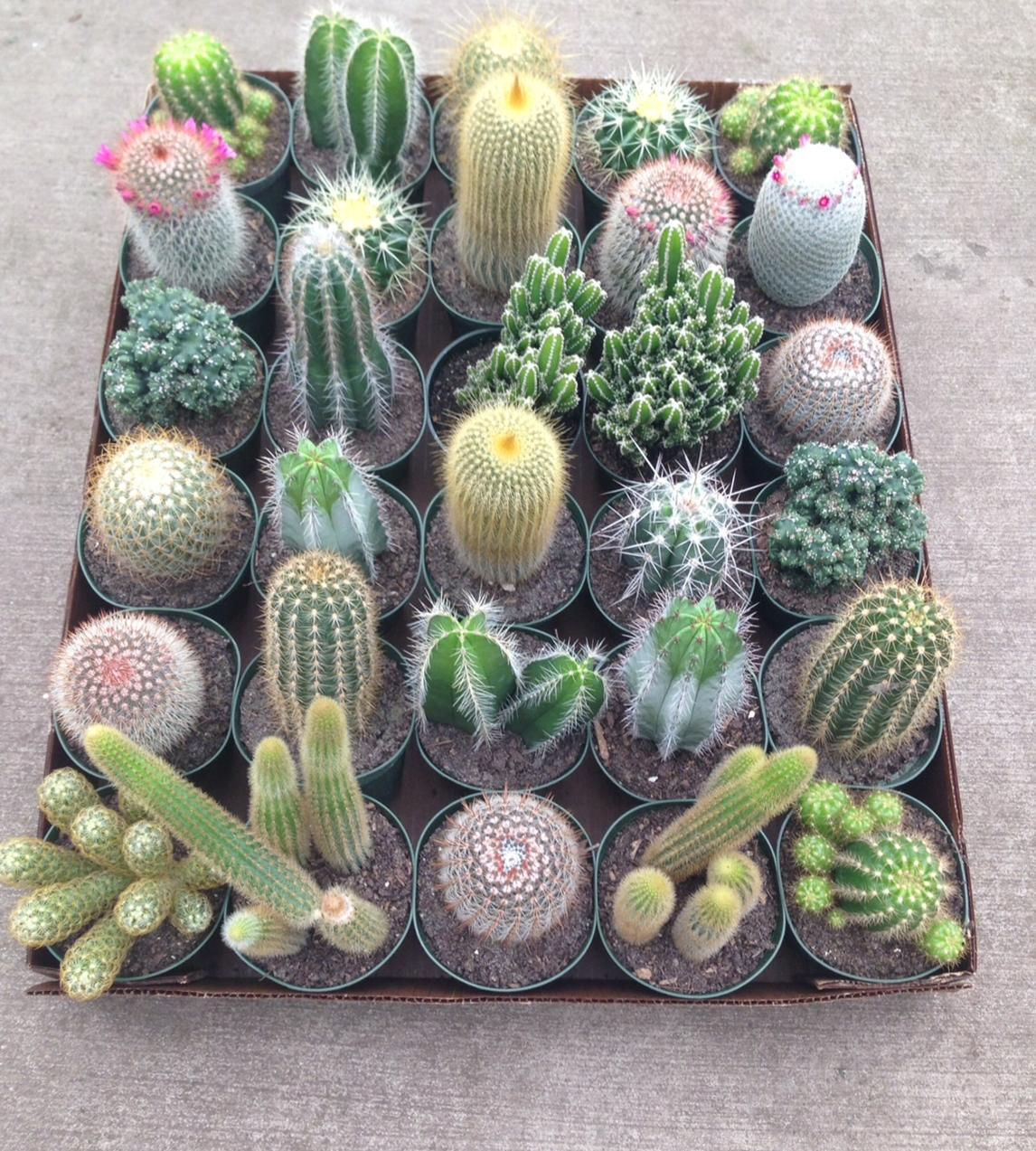 ASSORTED_CACTUS