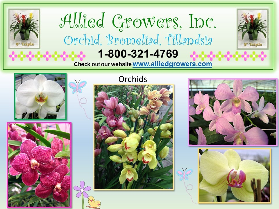 brom_orchid_flyer
