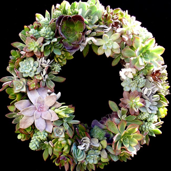 succulent_wreath_2010_large650